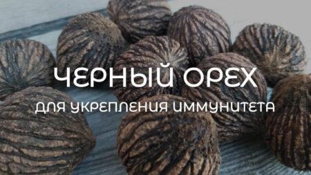Настойка черного ореха для укрепления иммунитета | ROSA
